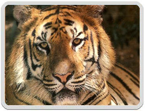 Tours to Sariska National Park